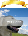 Pet care business advertising